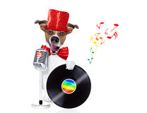 Dog singing with microphone Stock Photo