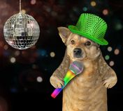 Dog singing a song at the stage royalty free stock photography