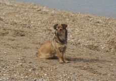 dog siting on the brown seand with sea rocks Royalty Free Stock Photo