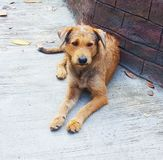 The dog sits on a concrete floor, cute Thai dog on road, animal royalty free stock images