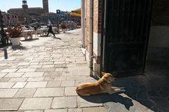 Dog sits near street cafe doors Stock Images