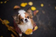 Dog leaves stock photos