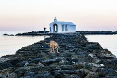 Dog sits on rocky pier who leads to a small church