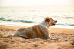 The dog sits on the sea, on the beach. royalty free stock image