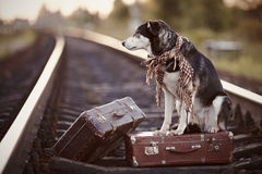 The dog sits on a suitcase on rails Stock Image