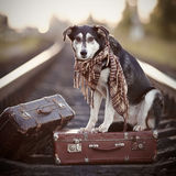 The dog sits on a suitcase on rails Royalty Free Stock Image
