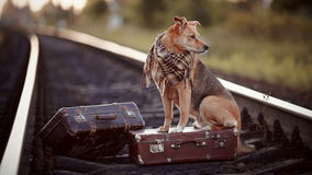The dog sits on a suitcase on rails Royalty Free Stock Photos