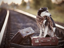 The dog sits on a suitcase on rails Stock Photo