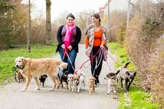 Dog sitters walking their customers Stock Images