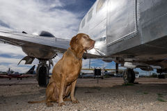 Dog sitting beside an airplane stock photography