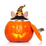 Halloween ghost dog trick or treat royalty free stock image