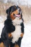 Dog Sitting At Dry Reed