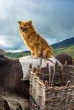 Dog Sitting on the Back of a Donkey Royalty Free Stock Photo