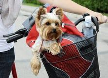 Dog sitting in basket Royalty Free Stock Image