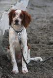 Dog sitting on the beach Stock Photos