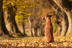 Dog is sitting in a beautiful autumn landscape. royalty free stock images
