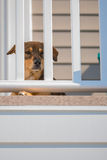 Dog sitting Behind Railing Stock Photos