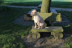 Dog sitting on the bench stock photos