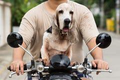 Dog sitting on the bike Royalty Free Stock Photo