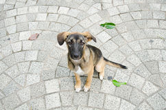 Dog sitting on the brick floor. Stock Image