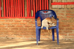Dog sitting on chair Royalty Free Stock Images