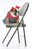 Dog sitting on chair Stock Photo
