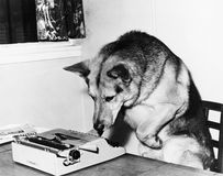 Dog sitting on a chair looking at the typewriter Stock Image