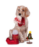 Dog sitting with christmas baubles,  Royalty Free Stock Photo