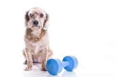 Dog sitting and concentrating for exercise Stock Photo