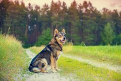 Dog sitting on dirt road Stock Photo