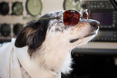 Dog sitting down wearing sunglasses and scarf in cockpit Stock Photos