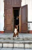 Dog sitting at the entrance to the Church Stock Images