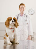 Dog sitting on exam room at vetraninary clinic Stock Images