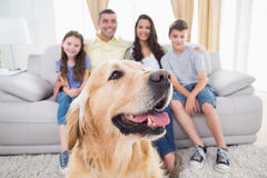 Dog sitting with family at home royalty free stock photos