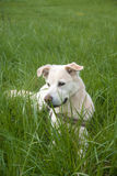 Dog sitting in the field Royalty Free Stock Photos