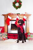Dog sitting by the fireplace Royalty Free Stock Photography