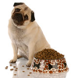 Dog sitting at food dish Royalty Free Stock Photo