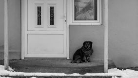 Dog sitting in front of the closed doors on a winter day Stock Photos