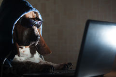 Dog sitting in front of computer Royalty Free Stock Image