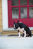 Dog sitting on front porch Royalty Free Stock Photo