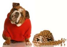 Dog sitting beside full bowl of food Stock Photo