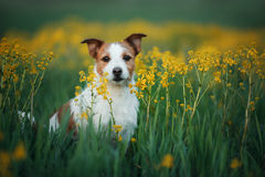 Dog sitting on the grass in the field stock image