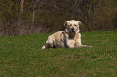 Dog sitting on grass Stock Image