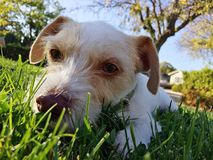 Dog sitting on grass Stock Images