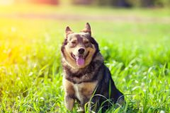 The dog sitting on the grass. Portrait of the dog sitting on the grass on a sunny day stock photography
