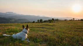 Dog sitting in the grass and watching the sunset Royalty Free Stock Image