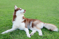 Dog sitting on green field Stock Photos