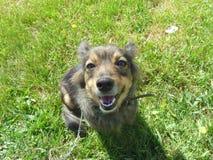 Dog. Sitting on green grass Royalty Free Stock Photos