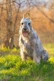 Dog sitting in green grass Stock Photo