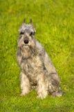 Dog sitting in green grass Stock Photos